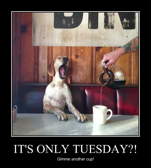 dogs tuesday coffee funny animals