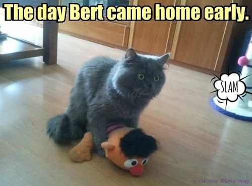 is a Winnie-Wonka thing The day Bert came home early.