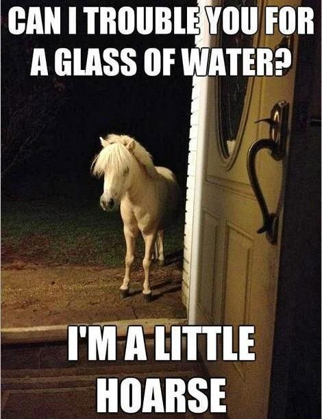 puns horse