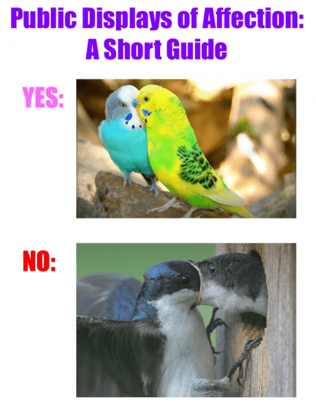 birds PDA relationships - 7819374848