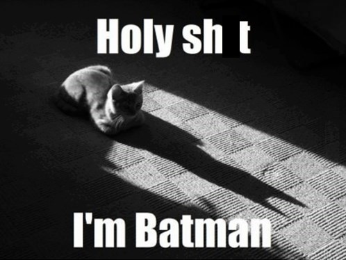 cat shadow batman - 7819736832