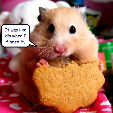 gerbils cute hamsters cookies
