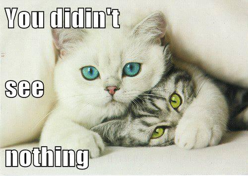 bully kitten cute - 7820643584