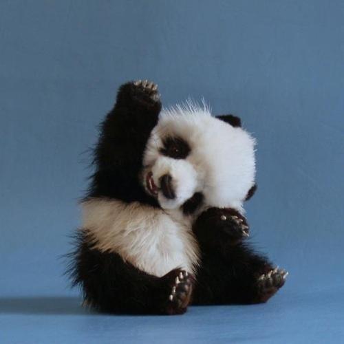 cute fuzzy panda - 7820913664