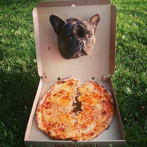 hungry dogs pizza funny - 7820913920