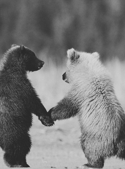 bears,cute,love,holding hands