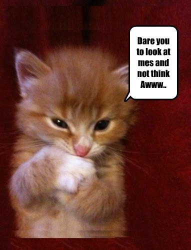 kitten,cute,dare
