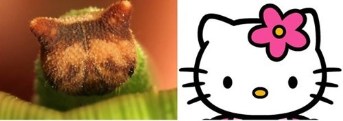 hello kitty totally looks like funny caterpillar