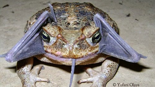 wtf toads bats science funny - 7821251840