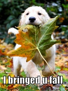 autumn puppies fall - 7821329408