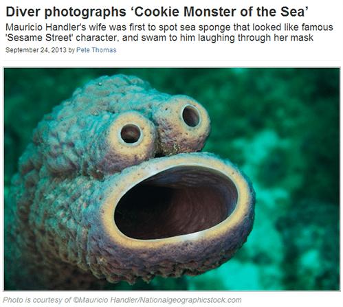 Cookie Monster Sesame Street - 7821443840