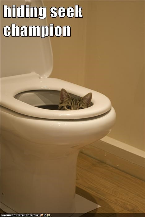 poop gross hide and seek toilet Cats