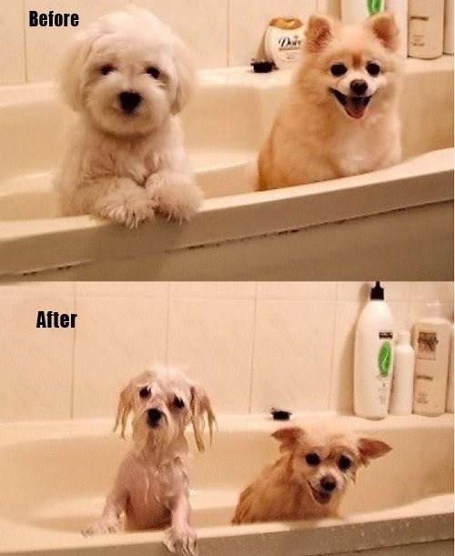 wet dogs bath funny - 7821477120