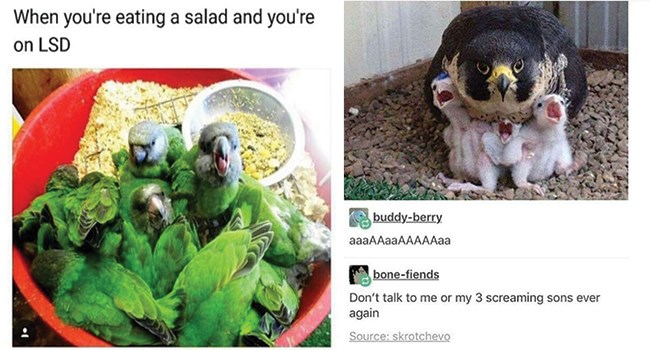bird memes that are upbeat and chirpy like everyone in the morning