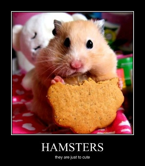 HAMSTERS they are just to cute