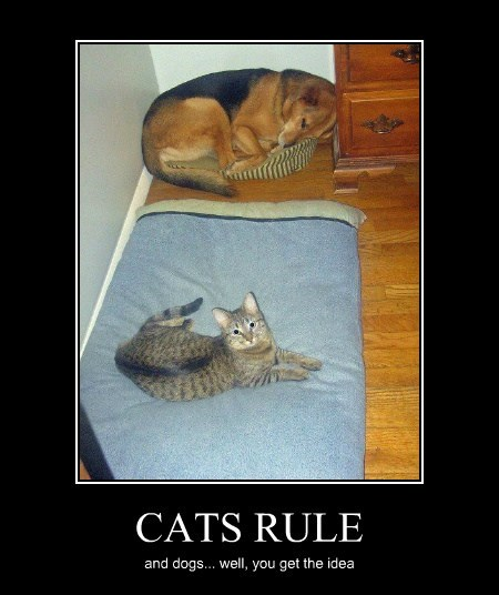 CATS RULE and dogs... well, you get the idea