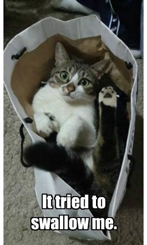 bag swallow Cats - 7821942784
