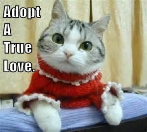 adopt,sweater,Cats