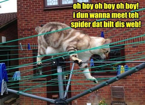 oh boy oh boy oh boy!  i dun wanna meet teh spider dat bilt dis web!