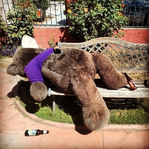 stuffed animals,drunk,bear,passed out,funny
