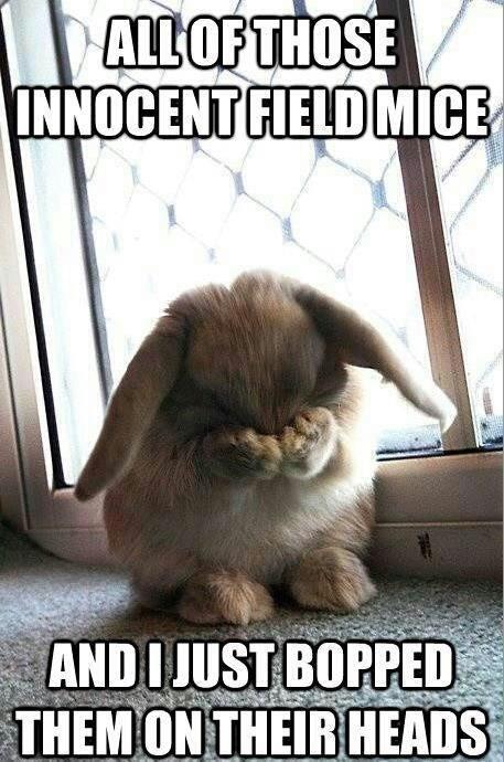 bunny foo foo,mice,bunny,funny