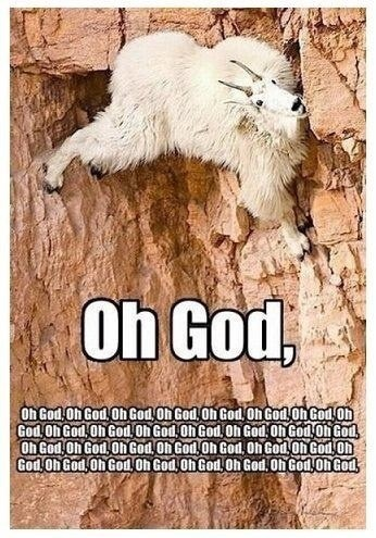 goats cliff oh god funny - 7822999040