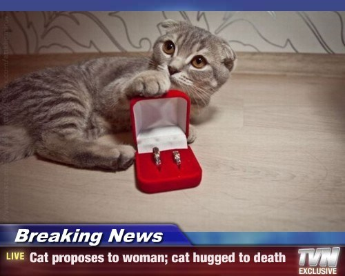 marriage proposal Cats - 7823035392