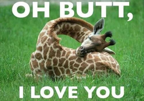 butt,funny,giraffes