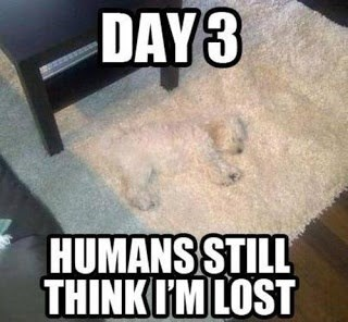 dogs lost shag carpet