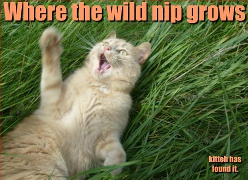 where the wild things are catnip Cats funny - 7823473408