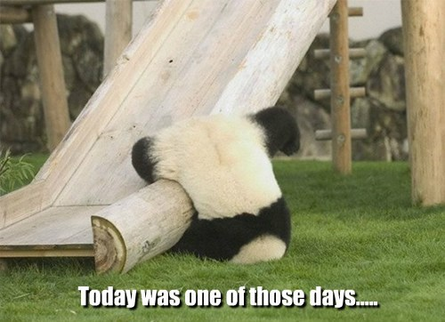 slide,panda,upside down