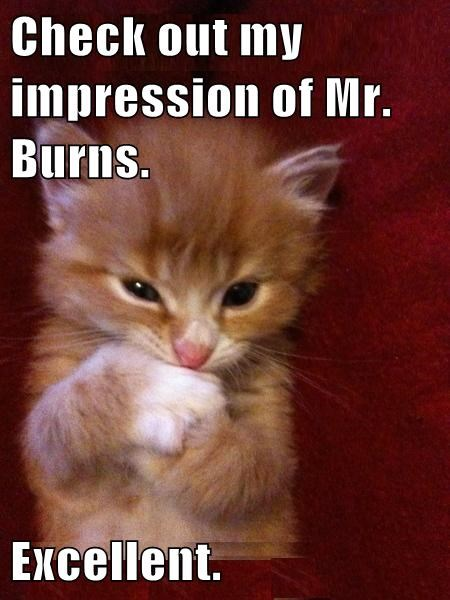 kitten,mr burns,impressions,cute,the simpsons