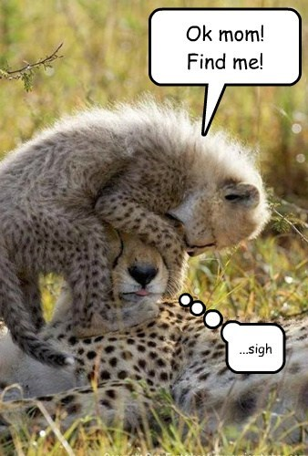 toddlers hide and seek cheetahs - 7824431616