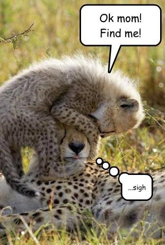 toddlers hide and seek cheetahs - 7824431616