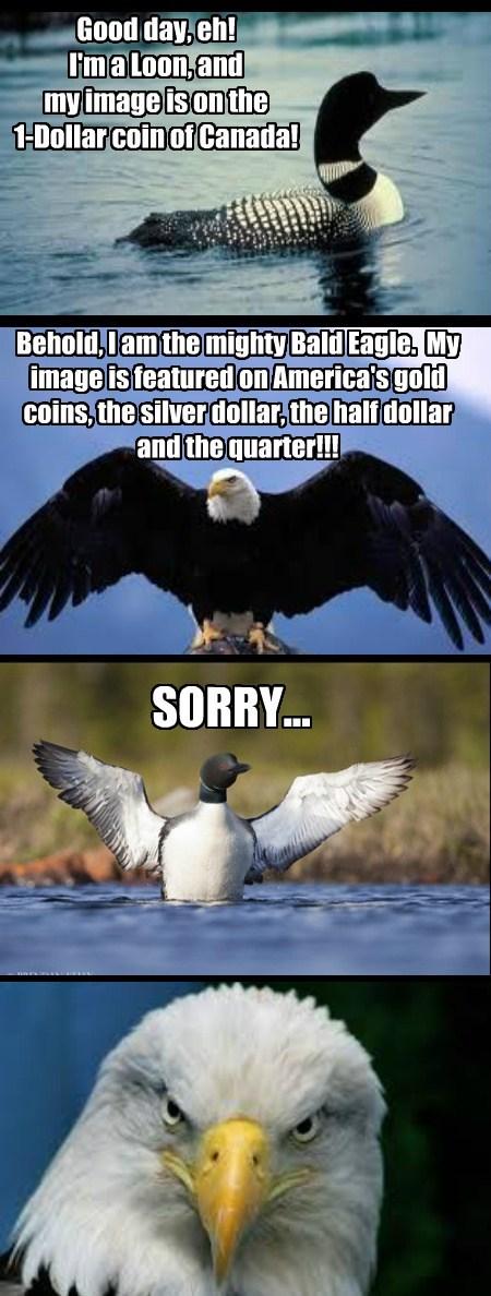 Canada,eagles,birds,america,funny,money