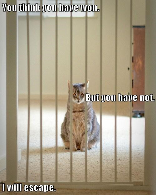 jail vengeance Cats funny - 7824509184