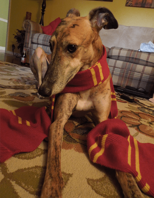 dogs Harry Potter cute - 7825408768