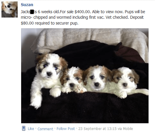 dogs what do you get shih tzu jack russell terrier funny failbook g rated - 7825418752