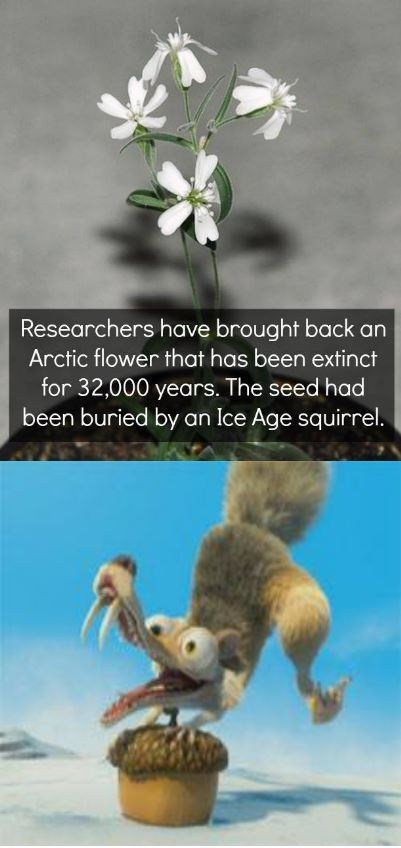 ice age,cartoons