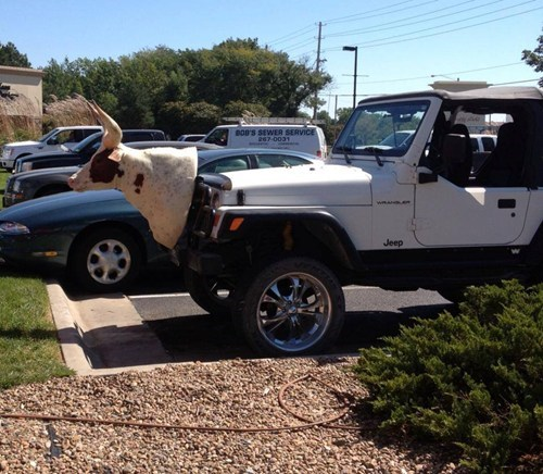 jeep,cattle,taxidermy,there I fixed it