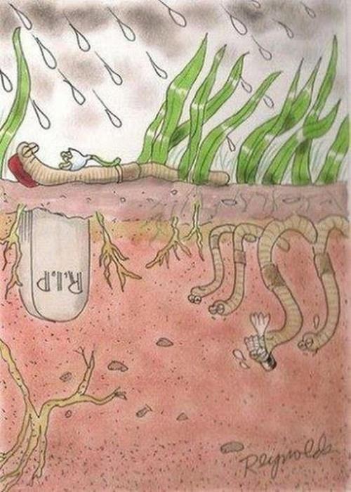 When Earthworms Die...