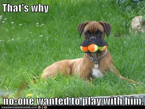 fetch dogs ball hog play - 7827025920