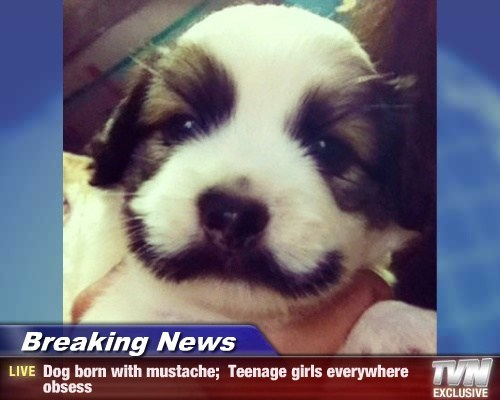 disguise mustache puppies cutest - 7827600384