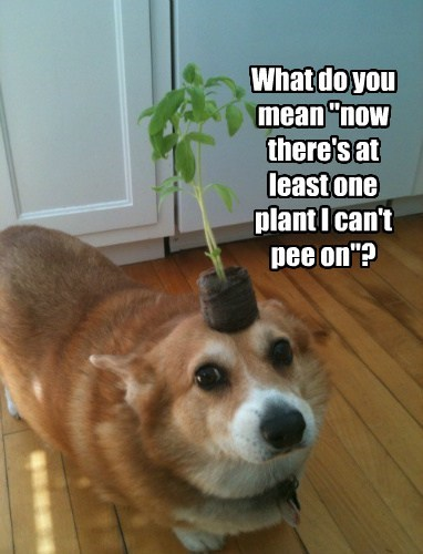 "What do you mean ""now there's at least one plant I can't pee on""?"