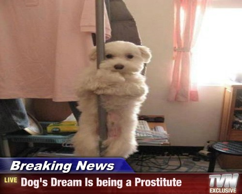 Breaking News - Dog's Dream Is being a Prostitute
