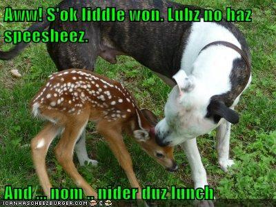 Cheezburger Image 7828769024