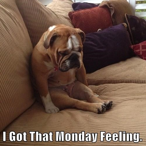 Sad dogs cute mondays