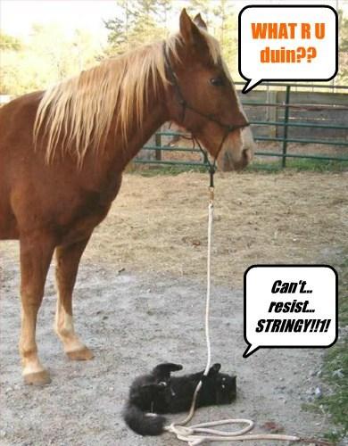 string horses Cats - 7829326336