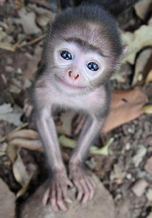 monkeys cute smile - 7829474560