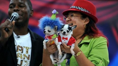dogs fashion - 7829584384